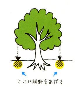 庭木の肥料やり
